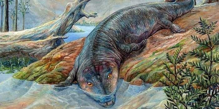 Красивые динозавры фото и описание   подборка 017