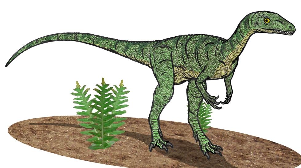 Красивые динозавры фото и описание   подборка 023