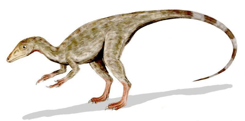 Красивые динозавры фото и описание   подборка 027