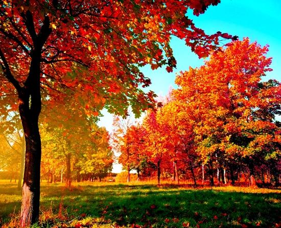 Красивые и яркие картинки про осень001