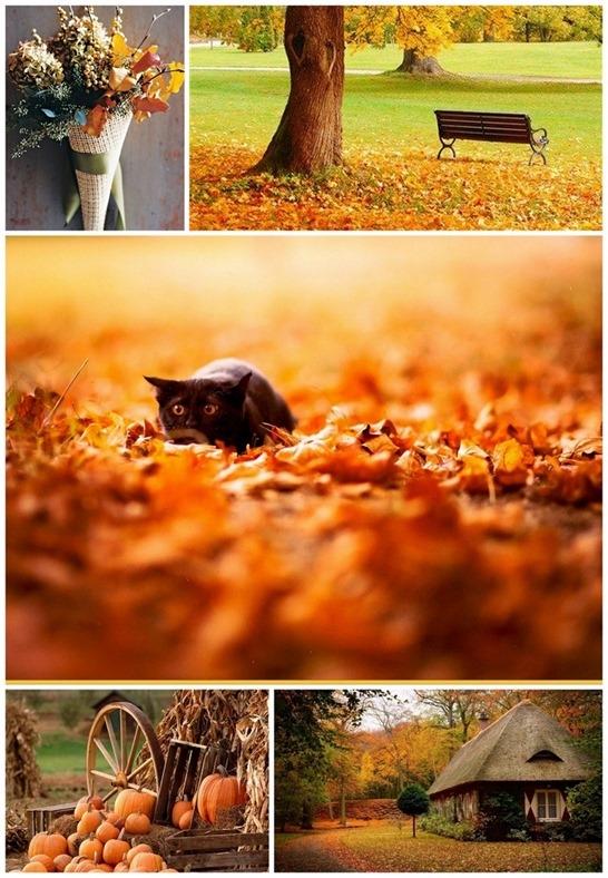 Красивые и яркие картинки про осень004
