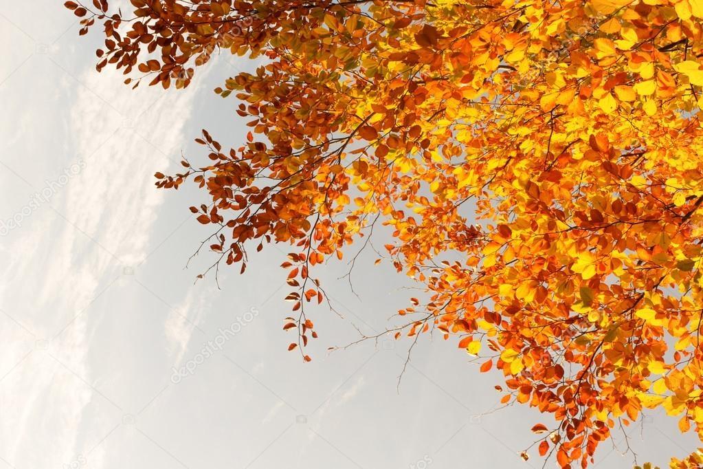 Красивые и яркие картинки про осень006