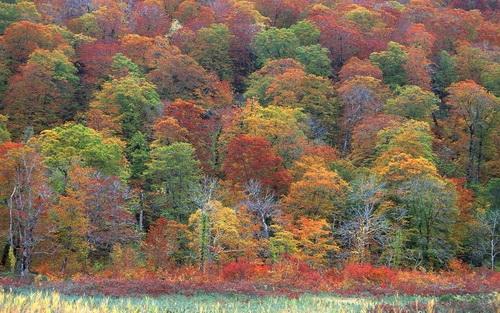 Красивые и яркие картинки про осень007
