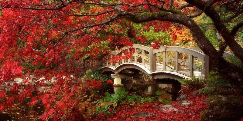 Красивые и яркие картинки про осень008