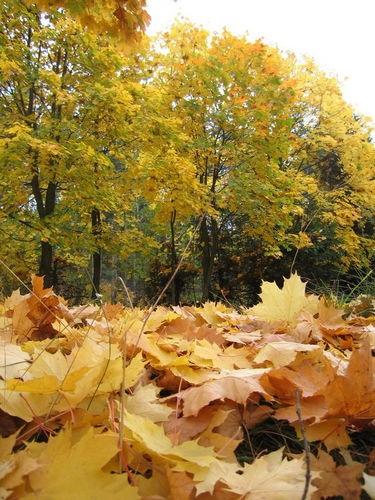Красивые и яркие картинки про осень011