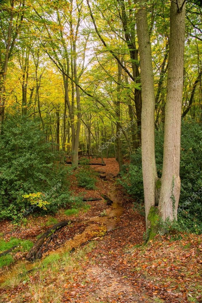 Красивые и яркие картинки про осень015