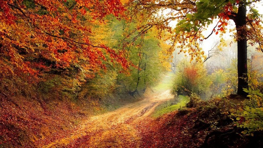 Красивые и яркие картинки про осень017