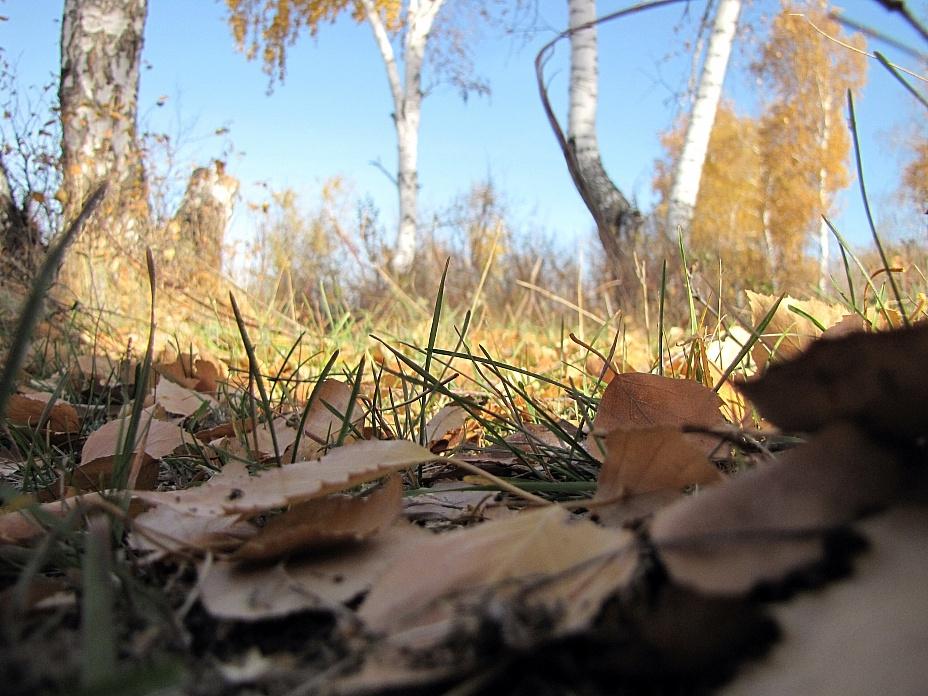 Красивые и яркие картинки про осень018