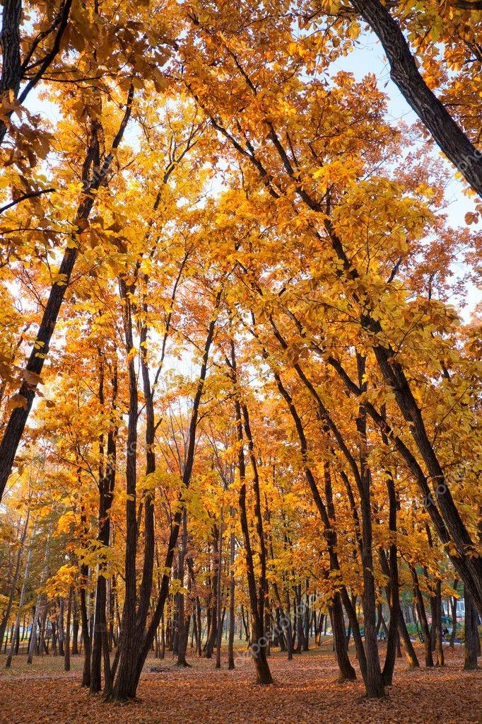 Красивые и яркие картинки про осень020