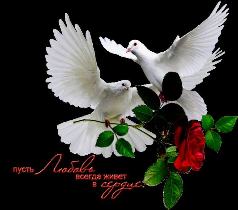 Днем, голуби с надписью ислама картинки