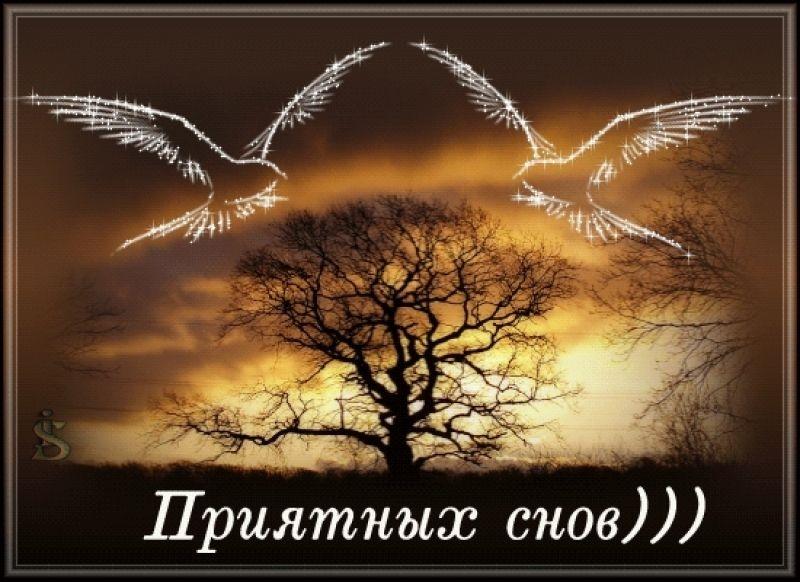Красивые картинки Лиза спокойной ночи015