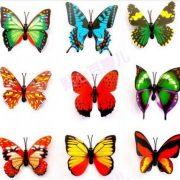 Красивые картинки бабочка для срисовки023