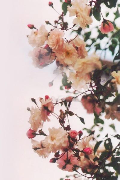 Красивые картинки вертикальные цветы002