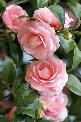 Красивые картинки вертикальные цветы007
