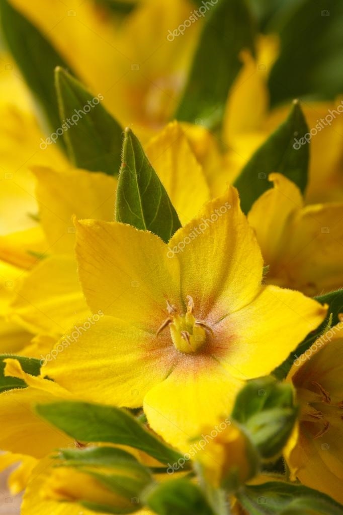 Красивые картинки вертикальные цветы009