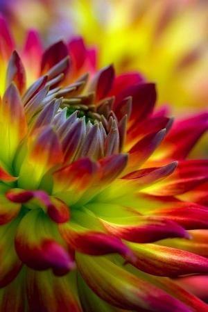 Красивые картинки вертикальные цветы010