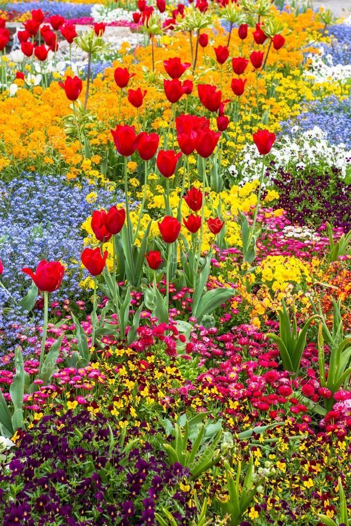 Красивые картинки вертикальные цветы013