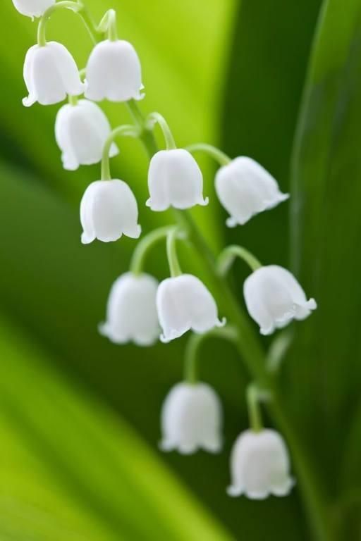 Красивые картинки вертикальные цветы015
