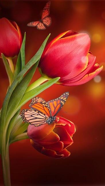 Красивые картинки вертикальные цветы023