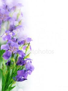 Красивые картинки вертикальные цветы024