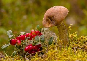Красивые картинки грибы и лес 018