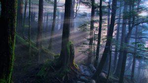 Красивые картинки для рабочего стола лес   скачать бесплатно (18)