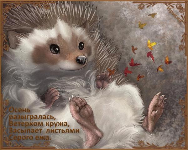 Красивые картинки ежик доброй ночи003