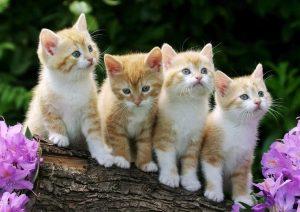 Красивые картинки котов и котят 027