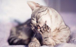 Красивые картинки кошки на телефон (29)