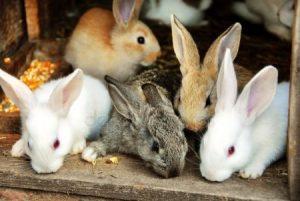 Красивые картинки кролика для детей 024
