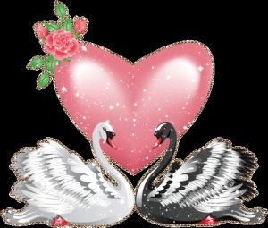 Красивые картинки лебедей на свадьбу024