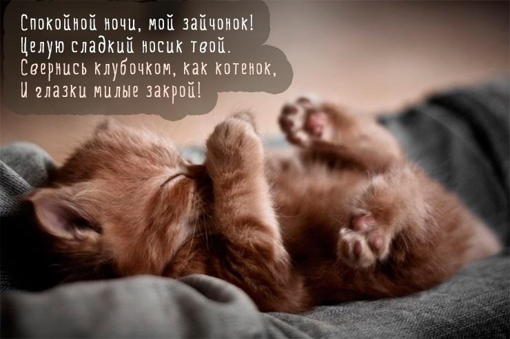 Красивые картинки мой котик любимый004