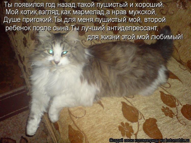 Красивые картинки мой котик любимый007