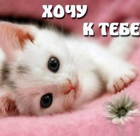 Красивые картинки мой котик любимый010