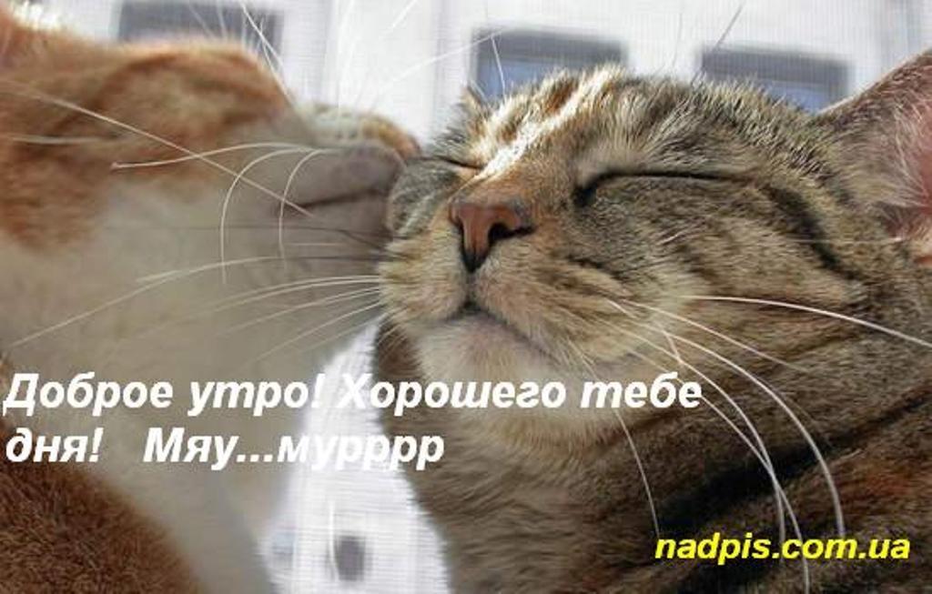 Красивые картинки мой котик любимый012