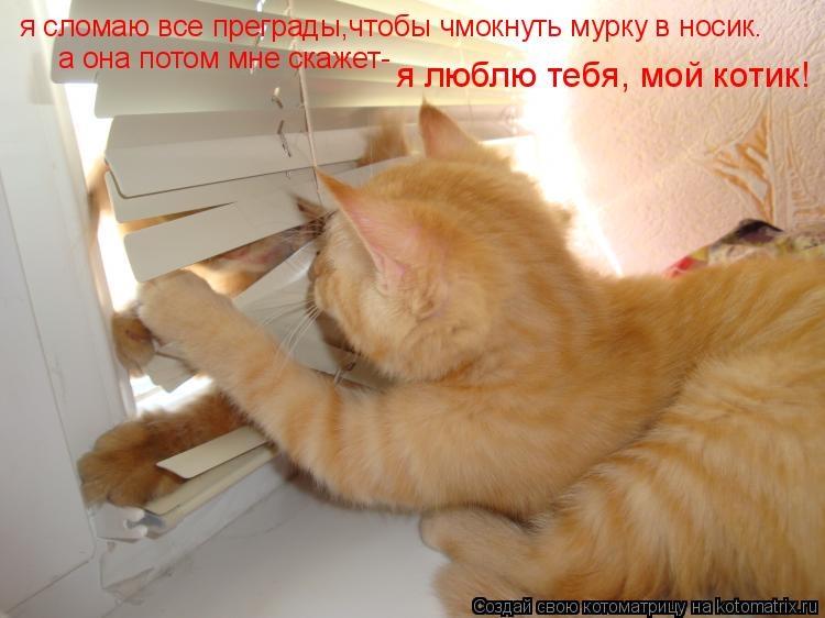 Красивые картинки мой котик любимый013