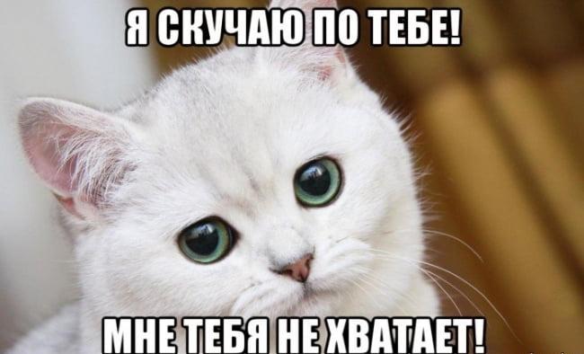 Красивые картинки мой котик любимый016