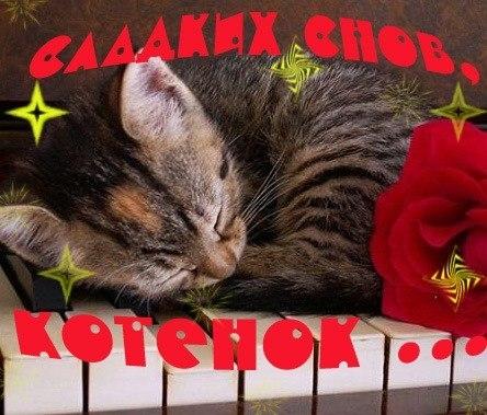 Красивые картинки мой котик любимый019