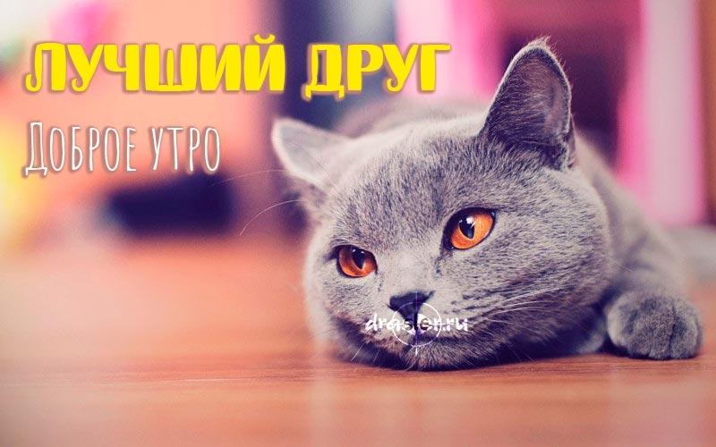 Красивые картинки мой котик любимый022