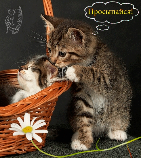 Красивые картинки мой любимый котик005