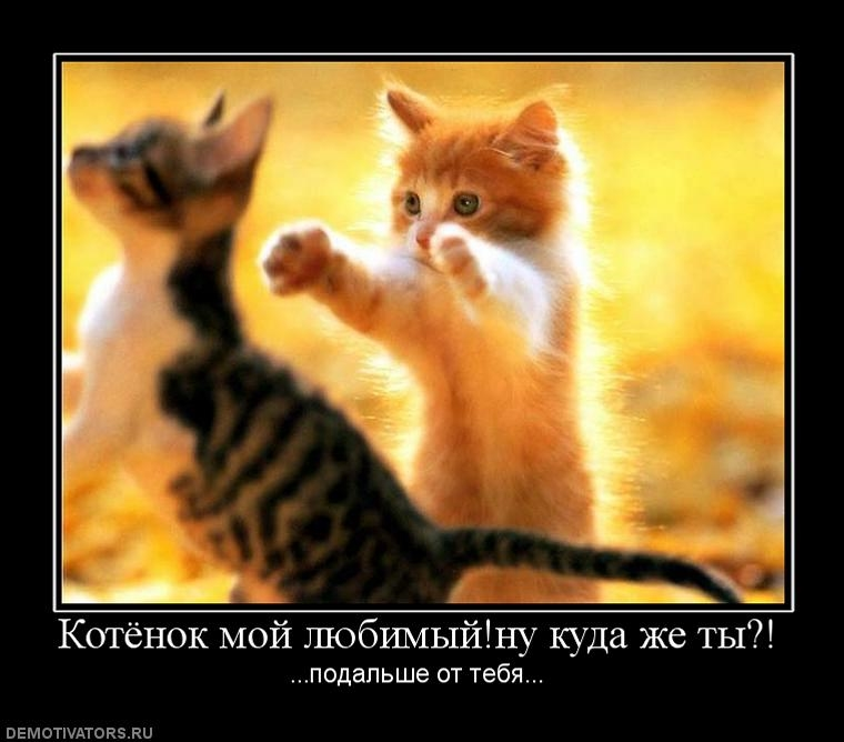 Красивые картинки мой любимый котик007