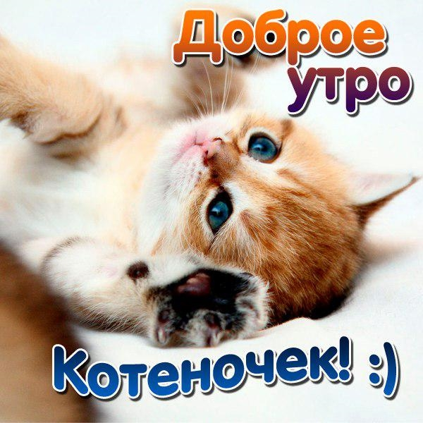 Красивые картинки мой любимый котик012