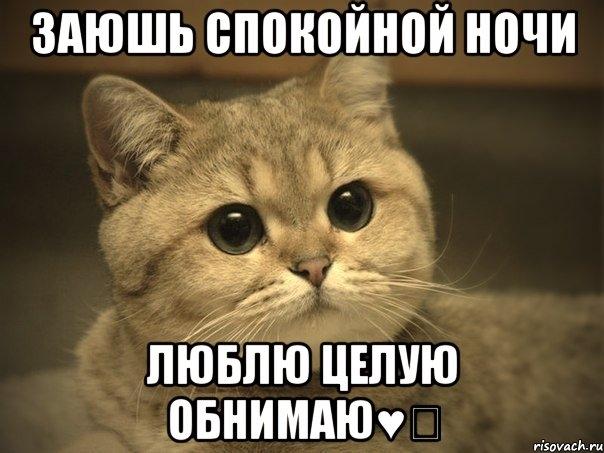 Красивые картинки мой любимый котик014