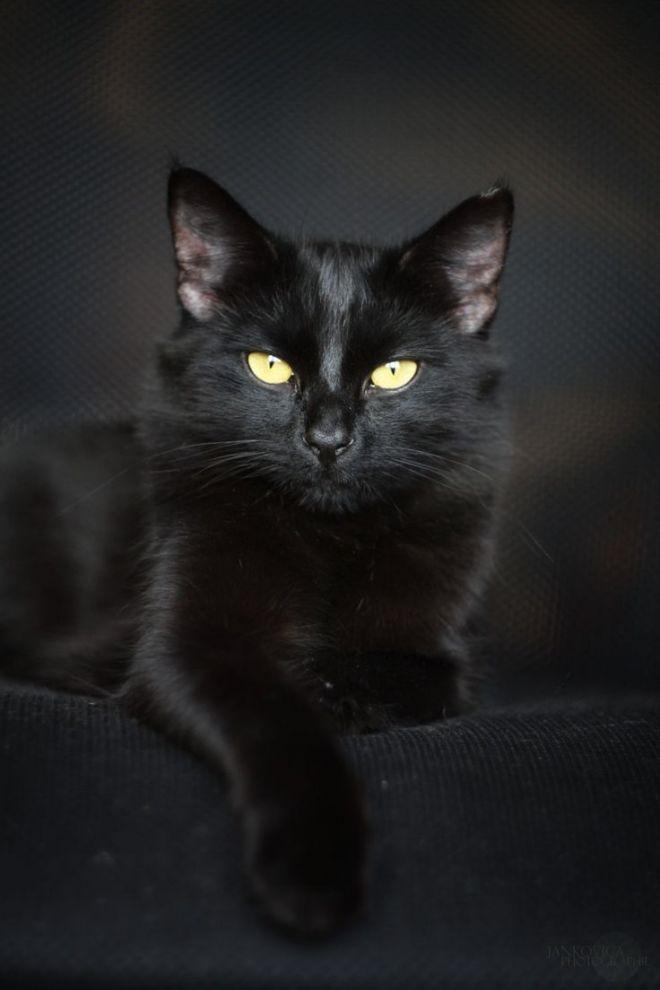 Красивые картинки мой любимый котик016