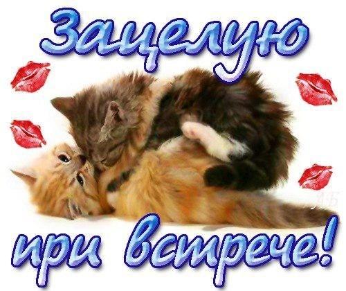 Красивые картинки мой любимый котик019