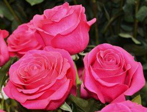 Красивые картинки на рабочий стол красивые розы020