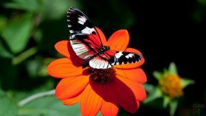Красивые картинки на телефон бабочки (26)