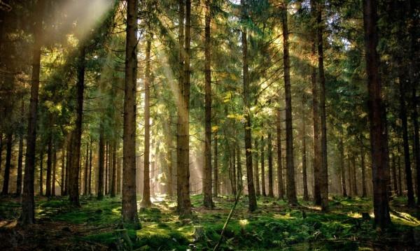 Красивые картинки с лесом 001