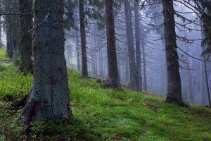 Красивые картинки с лесом 024