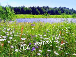 Красивые картинки с летом   открытки 020